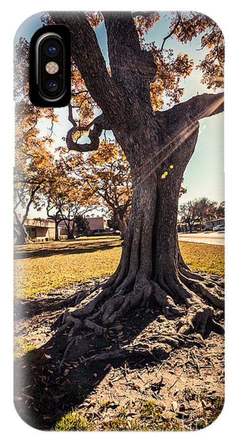 America IPhone X Case featuring the photograph A Big Tree Trunk Of Long Beach In The Autumn by Sviatlana Kandybovich