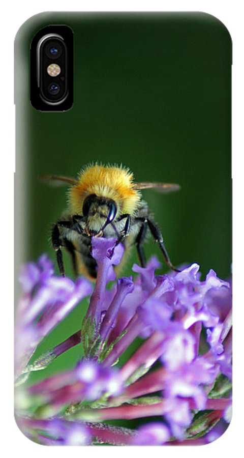 Bumblebee IPhone X Case featuring the photograph A Bumblebee On Lilac by Michela Villa