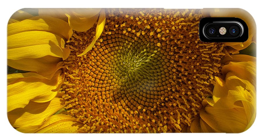 Sunflower IPhone X Case featuring the photograph A Burst Of Sun by Arlene Carmel