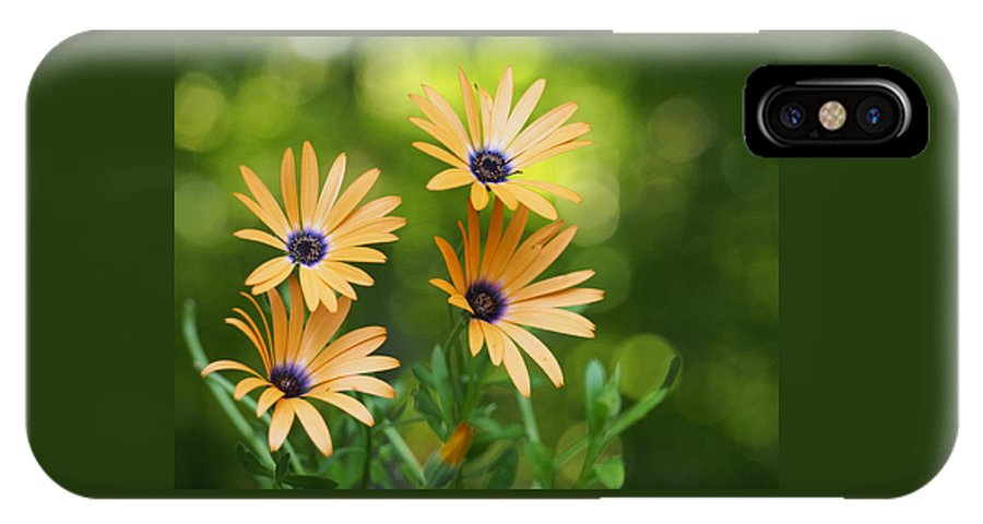 Flowers IPhone X / XS Case featuring the photograph A Cheerful Symphony by Dorothy Lee
