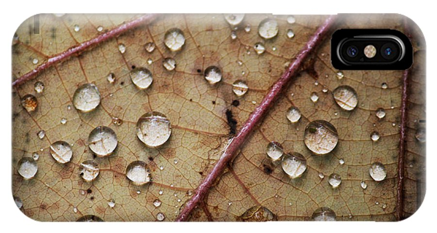 Leaf IPhone X Case featuring the photograph A Close Up Of A Wet Leaf by Andrew Sliwinski