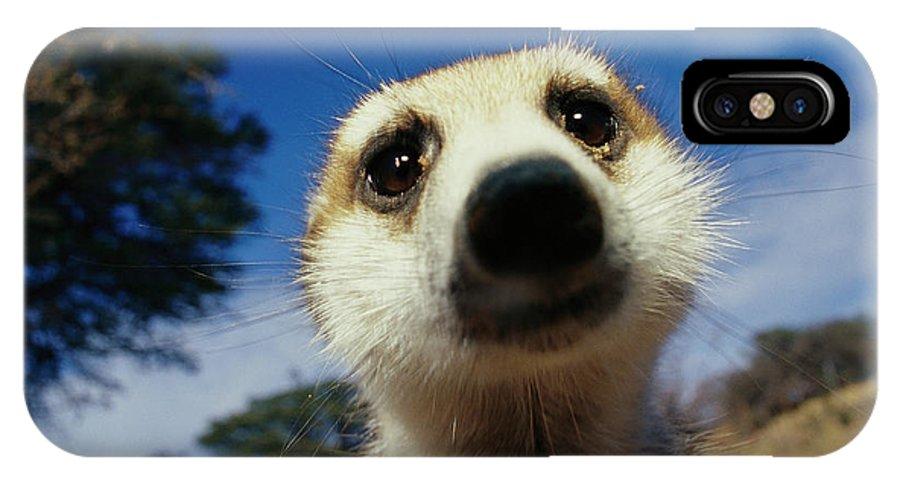Africa IPhone X / XS Case featuring the photograph A Close View Of A Meerkats Face by Mattias Klum