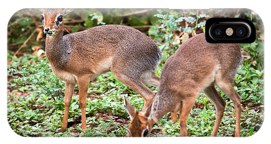Dik-dik IPhone X Case featuring the photograph A Couple Of Dik-dik Antelopes In Tanzania. Africa by Michal Bednarek