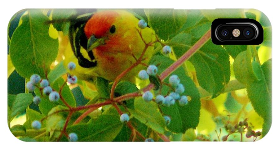 Western Tanagers IPhone X Case featuring the photograph A Day With Mr. Tanager 3 by Jacquelyn Roberts