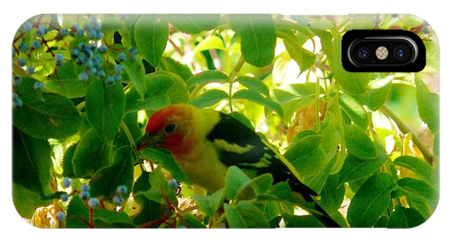 Western Tanagers IPhone X Case featuring the photograph A Day With Mr. Tanager 7 by Jacquelyn Roberts
