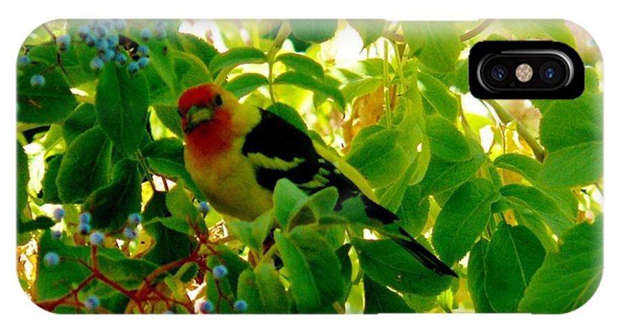 Western Tanagers IPhone X Case featuring the photograph A Day With Mr. Tanager 8 by Jacquelyn Roberts