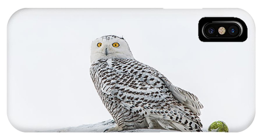 Snowy Owl IPhone X Case featuring the photograph A Game Of Fetch by Scott Thorp