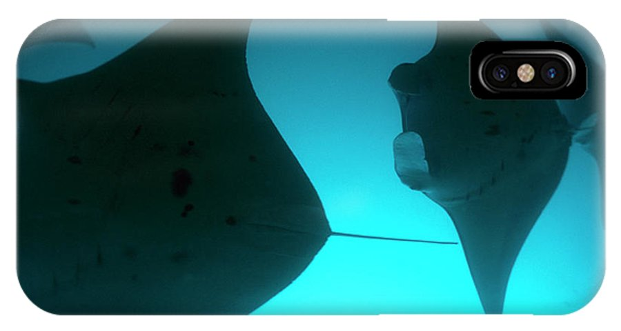 Pacific Islands IPhone X / XS Case featuring the photograph A Group Of Silhouetted Manta Rays by Heather Perry