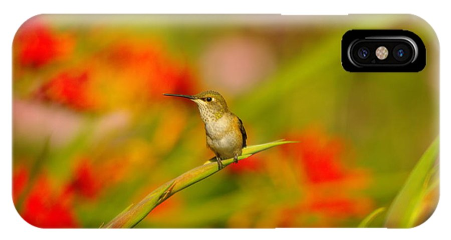 Birds IPhone X Case featuring the photograph A Humming Bird Perched by Jeff Swan
