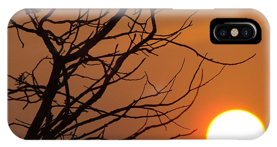 A Hummingbird In A Tree At Sunset In Texas On 4/2/14. IPhone X Case featuring the photograph A Hummingbird Setting In A Tree At Sunset by Rebecca Cearley
