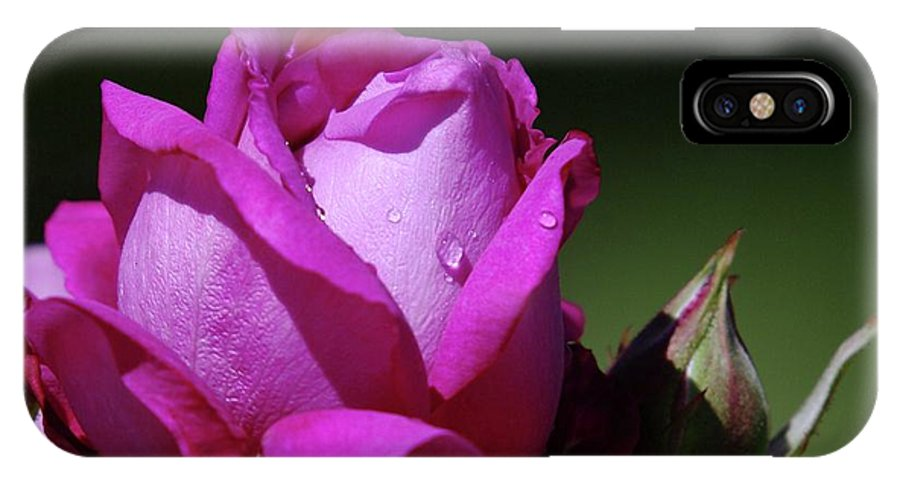 Blue Rose IPhone X Case featuring the photograph A Light Blue Rose by Jeff Swan