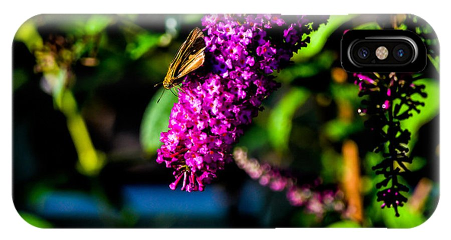 Butterfly Bush IPhone X Case featuring the photograph A Little Breakfast by Mary Hahn Ward