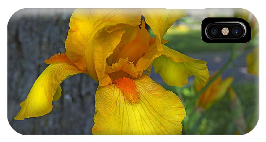 Iris IPhone X Case featuring the photograph A Lively Soul Blooms by Betsy Knapp