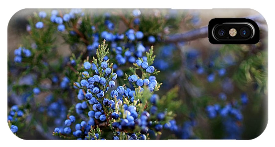 Cedar Tree IPhone X Case featuring the photograph A Local Tree In Winter Finery by Carolyn Fletcher