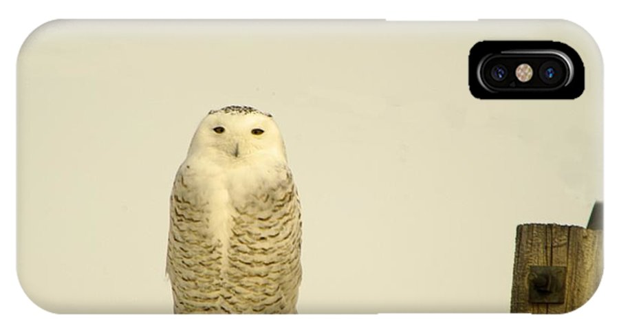 Birds IPhone X Case featuring the photograph A Lone Artic Owl by Jeff Swan