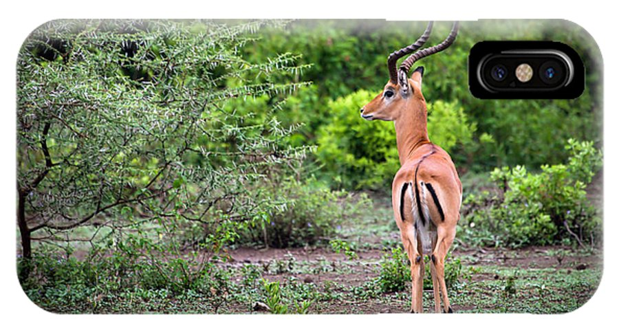 Impala IPhone X Case featuring the photograph A Male Impala In Lake Manyara National Park. Tanzania. Africa. by Michal Bednarek
