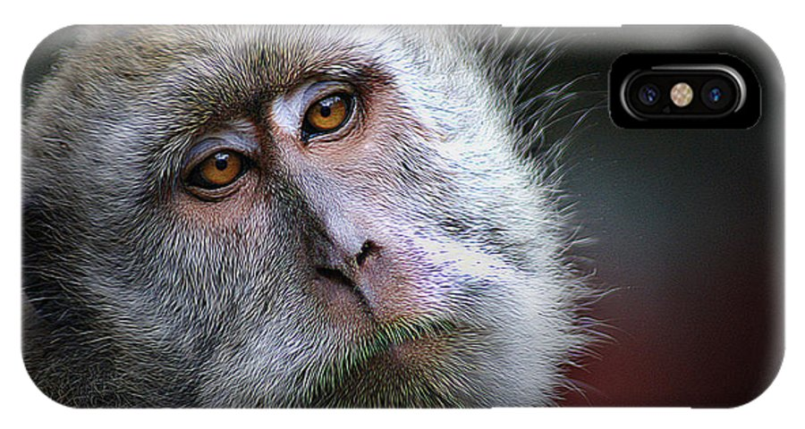 Animal IPhone X Case featuring the photograph A Monkey's Look by Ben Yassa