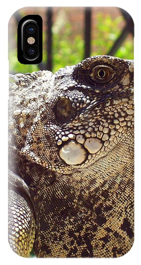 Lizard IPhone X Case featuring the photograph A Mother Could Love Him by Lew Davis