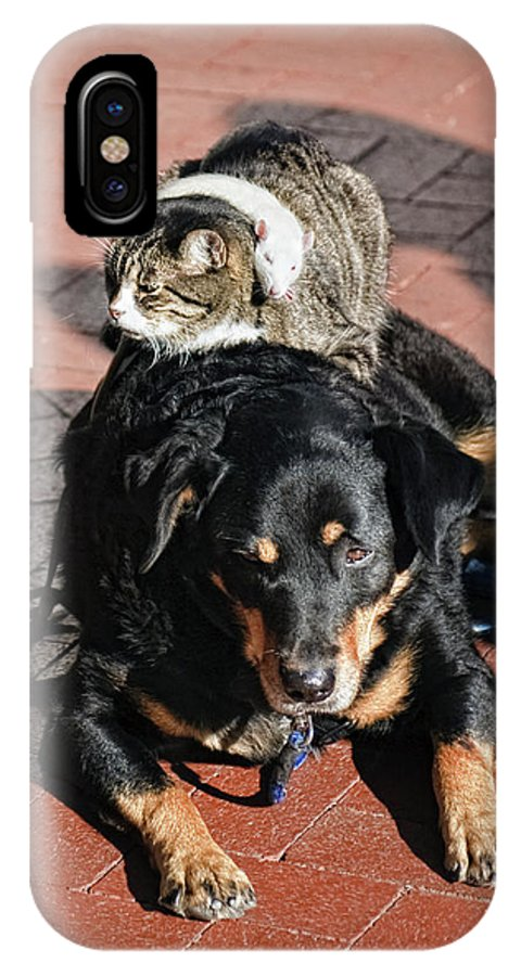 Balance IPhone X Case featuring the photograph A Mouse On A Cat On A Dog In Santa by Kevin Steele