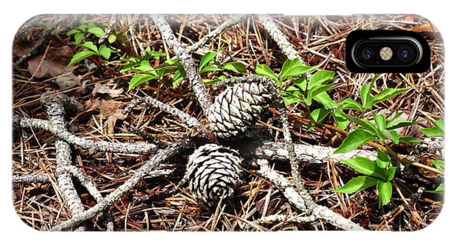 Pine Cones IPhone X / XS Case featuring the photograph A Natural Gathering by Barbara McDevitt