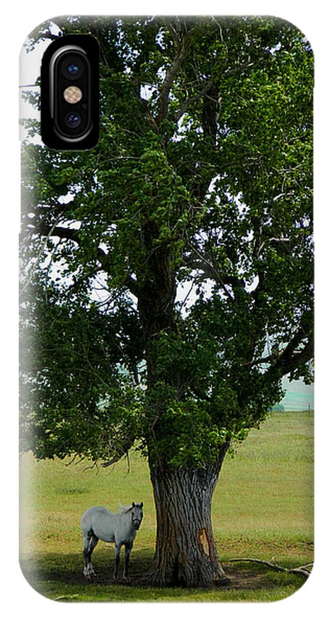 Horse IPhone X Case featuring the photograph A One Horse Tree And Its Horse by Jacqueline DiAnne Wasson