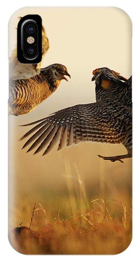 Outdoors IPhone X Case featuring the photograph A Pair Of Prairie Chickens Face by Jim Richardson