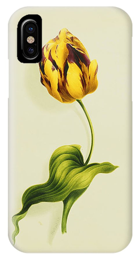 Biology IPhone X Case featuring the painting A Parrot Tulip by James Holland