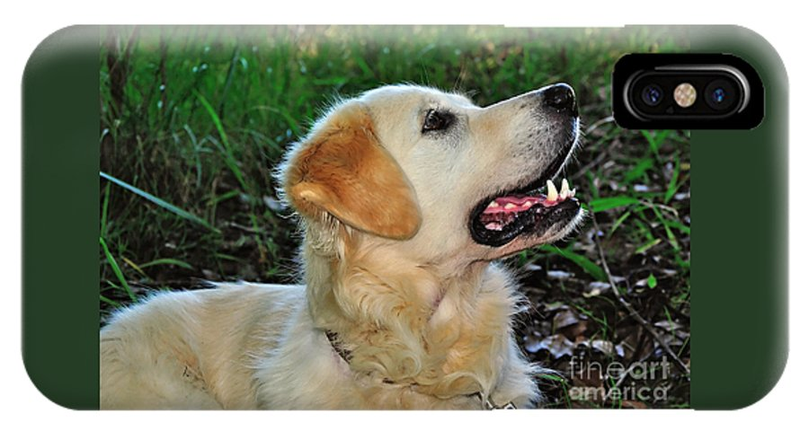 Photography IPhone X Case featuring the photograph A Retriever's Loving Glance by Kaye Menner