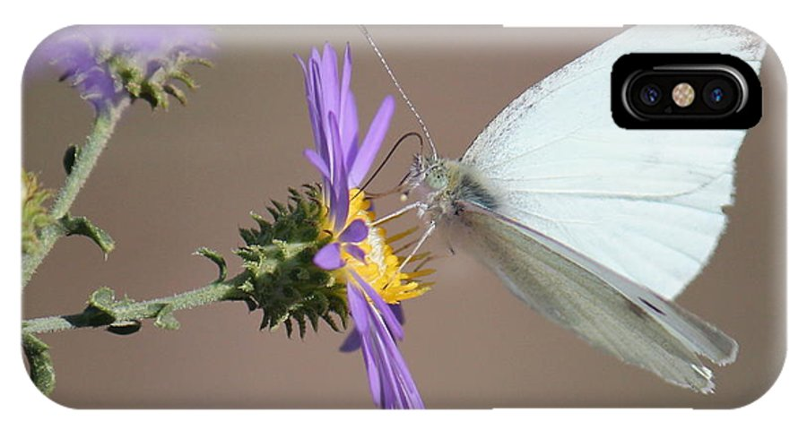 Butterfly IPhone X Case featuring the photograph A Sip Of Daisy by Trent Mallett