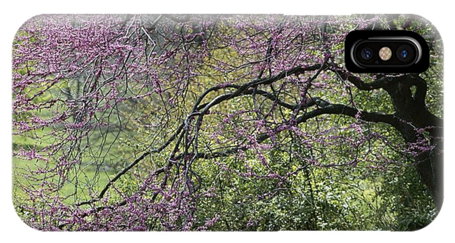Day IPhone X / XS Case featuring the photograph A View Of A Blooming Redbud Tree by Darlyne A. Murawski