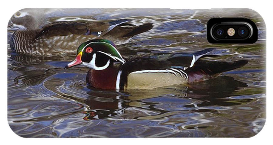 Ducks IPhone X Case featuring the photograph A Wood Duck Pair by Jeff Swan