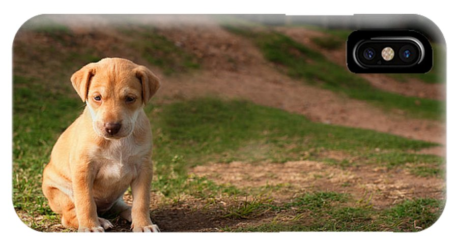 Abandoned IPhone X Case featuring the photograph Abandoned Puppy by Howard Klaaste