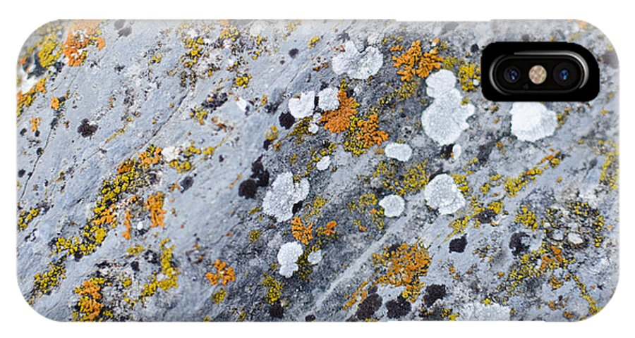 Abstract IPhone X Case featuring the photograph Abstract Orange Lichen 2 by Chase Taylor