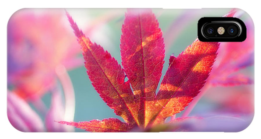 Nature IPhone X Case featuring the photograph Acer Beautiful Fall by Tanja Riedel