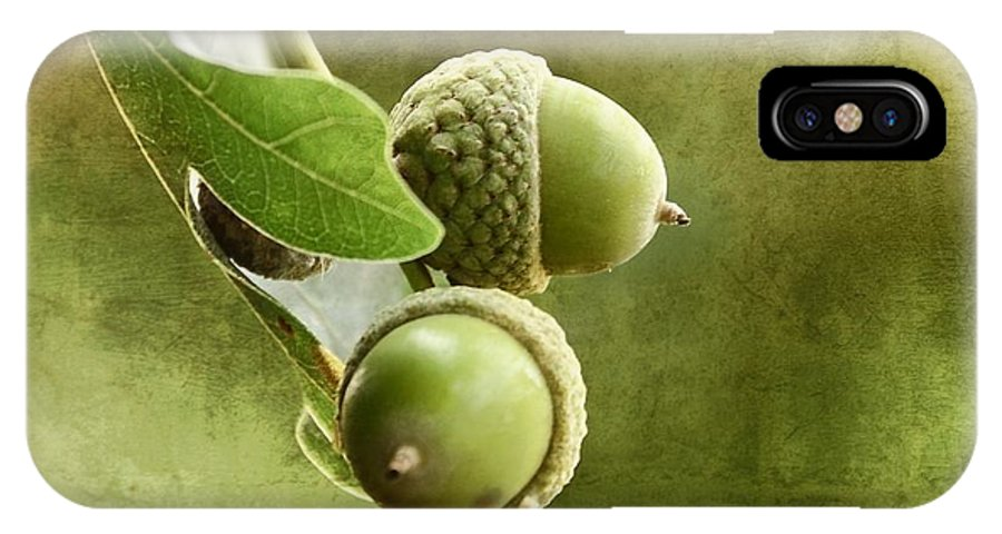 Oak IPhone X Case featuring the photograph Acorns by Gynt