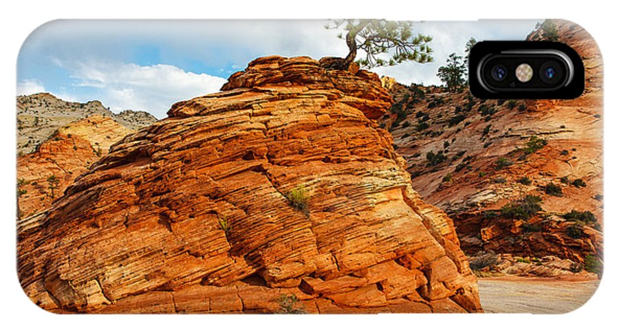 James Marvin Phelps Photography IPhone X Case featuring the photograph Adaptable Pinyon Pine by James Marvin Phelps
