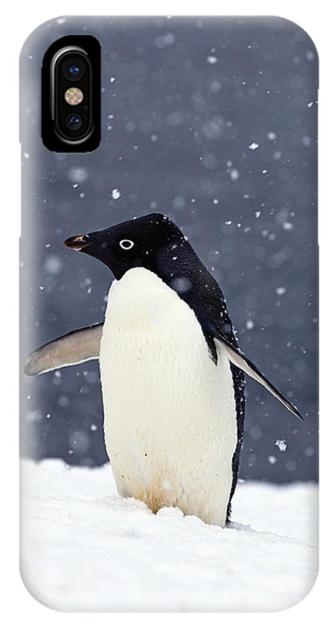 Kazlowski IPhone X Case featuring the photograph Adelie Penguin Standing In Fresh by Steven Kazlowski