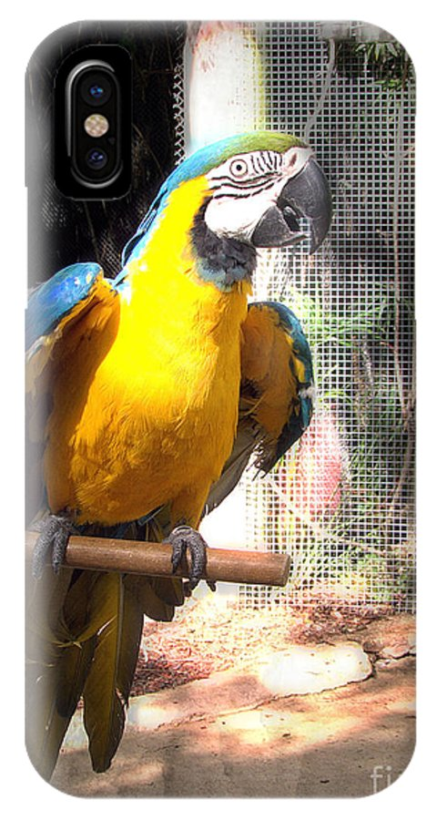 Macaw IPhone X Case featuring the photograph Adopted Macaw - Rescued Parrot by Ella Kaye Dickey