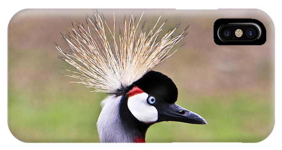 Golden IPhone X Case featuring the photograph African Crowned Crane Portrait by Douglas Barnett