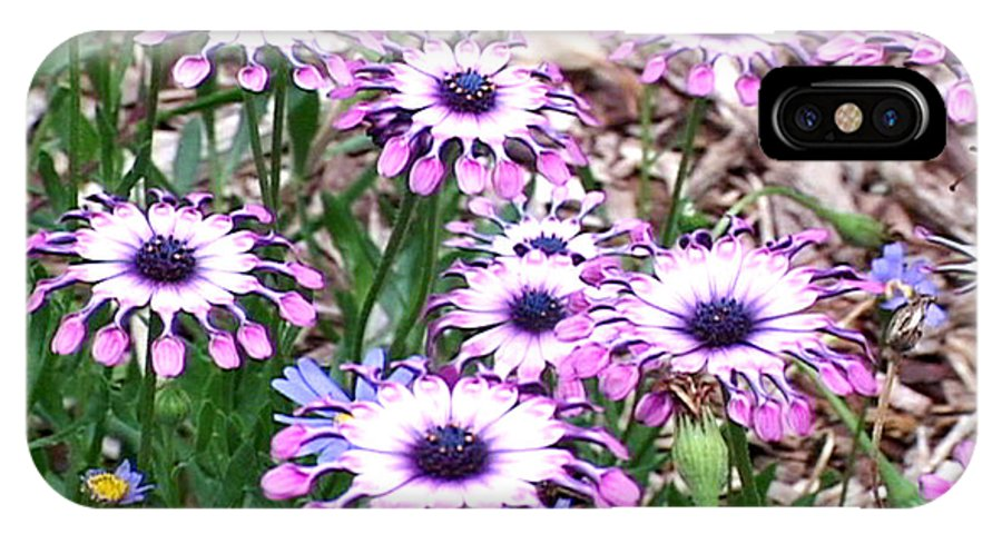 African IPhone X Case featuring the photograph African Daisies by David Wallace Crotty