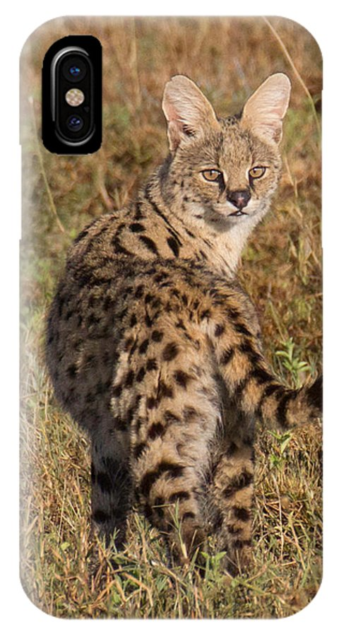 Serval IPhone X Case featuring the photograph African Serval Cat 1 by Chris Scroggins