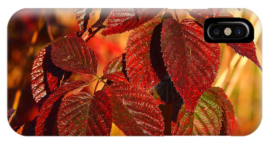 Fall Colors IPhone X Case featuring the photograph After The Frost by John Kulberg