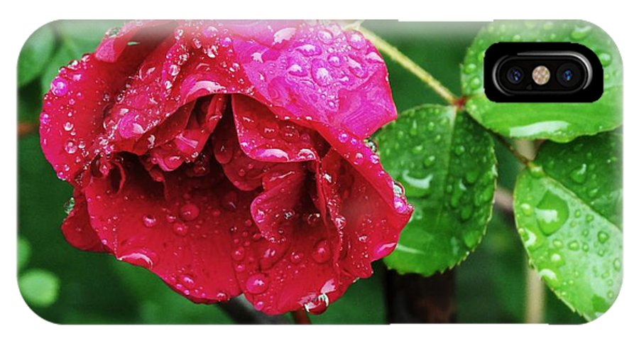Rose IPhone X Case featuring the photograph After The Rain by Laura Gillmer