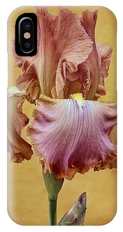 Bearded Iris IPhone X Case featuring the photograph Afternoon Delight - 1 by Nikolyn McDonald