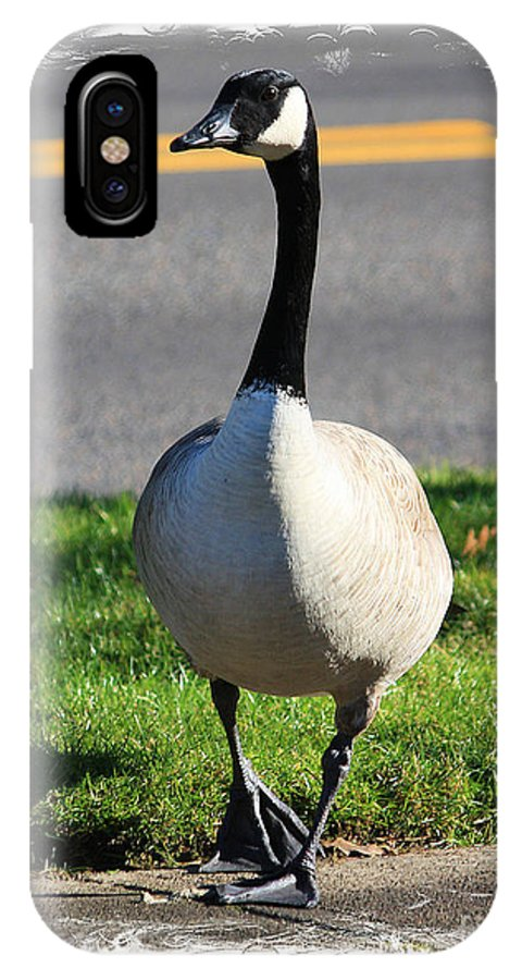 Wildlife IPhone X Case featuring the photograph Afternoon Stroll by Steven Baier