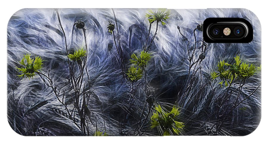 Cornflowers IPhone X Case featuring the photograph Against The Wind by Joachim G Pinkawa
