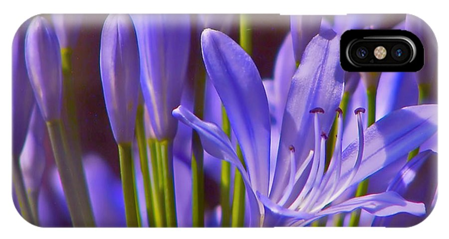 Agapanthus IPhone X / XS Case featuring the photograph Agapanthus - Lily Of The Nile - African Lily by Nikolyn McDonald