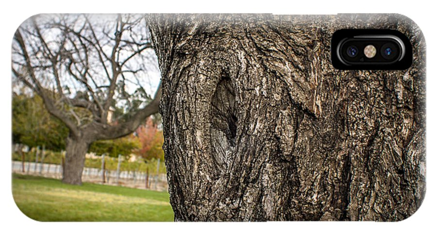 Tree IPhone X Case featuring the photograph Aged by Josh Quillin