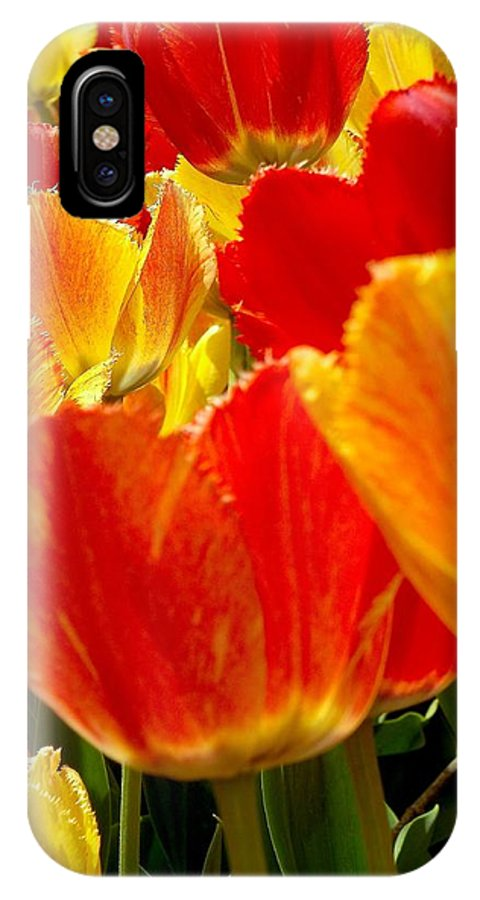 Wonderful Colorful Tulips IPhone X Case featuring the photograph Agressive Tulips by Sylvia Herrington