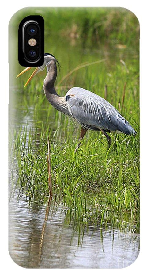 Bird IPhone X Case featuring the photograph Ah That Tastes Good by Deborah Benoit